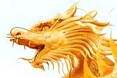 12628459-golden-dragon-statue-isolated-on-white-background